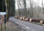 Wertvolle Hölzer aus heimischen Wäldern – Eichen- und Buntlaubholz-Submission