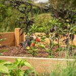 Gemüse ganzjährig züchten: 4 Tipps für ein selbstgebautes Frühbeet