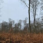 Nußloch: Dürreschäden machen Holzeinschlag am Wieslocher Weg notwendig