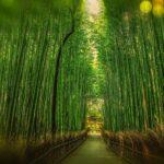 St. Ilgener Bambuswald gepflanzt - </br>Hervorragende Adaption an Klimawandel