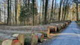Eiche und Roteiche erzielten Rekorderlöse bei der diesjährigen Holzsubmission