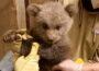 Bär Martins Vermächtnis ist noch klein: </br>Erste Fotos vom Bären-Nachwuchs im Zoo
