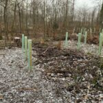 Veränderungen im Nußlocher Gemeindewald - </br>3000 neue Bäume gepflanzt