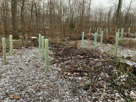 Veränderungen im Nußlocher Gemeindewald – </br>3000 neue Bäume gepflanzt