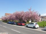 Phantastisches Frühlingswetter – Blüten ohne Ende und der erste Spargel