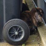 Tierquälerei - Kaninchen wie Müll entsorgt - In der Natur überleben sie nicht lange