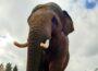 """Elefanten-WG im Zoo vergrößert sich: </br>Ein """"Schwede"""" zieht mit ein"""