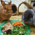 Frühling: Für Haus-Kaninchen die Zeit, um ins Außengehege umzuziehen