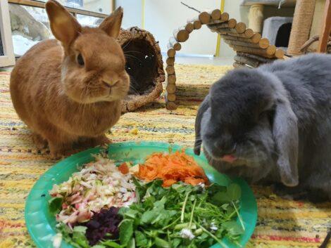 Frühling: Für Haus-Kaninchen die Zeit, </br>um ins Außengehege umzuziehen