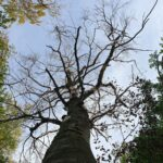 Auch Buchen können verdursten  - Wälder im Rhein-Neckar-Kreis im Klimastress