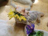 Ton-Tatze-Tierheim: Schwer vermittelbare Tiere aufgrund spezieller Bedürfnisse