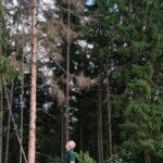 """Aufruf des Kreisforstamts an Waldbesitzende: """"Auf zur Bohrmehlsuche!"""""""