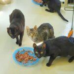 Animal Hoarding-Fall: 19 (!) neue Katzen im Tierheim - Familien dringend gesucht