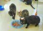 Animal Hoarding-Fall: 19 (!) neue Katzen im Tierheim – Familien dringend gesucht