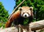 Den Zoo besuchen, sich impfen lassen und an Verlosung teilnehmen