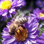 Erzeugnisse der Honigbiene: Workshop-Wochenende im Zoo