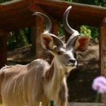 """Mit der """"3G-Regel"""" in den Zoo: Impf-, Test- oder Genesenen-Nachweis erforderlich"""