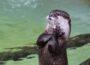 Spannender Herbst in der Zoo-Akademie: Workshops und Ferienangebote